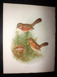 Butler, Frohawk & Gronvold 1908 Antique Bird Print. Dartford Warbler 21